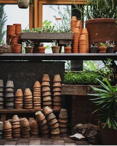 Where Women Create Gardening- potting shed photography Marigolds In Garden, Herb Garden, Vegetable Garden, Garden Plants, Indoor Plants, Planting Flowers, Concrete Patios, Garden Care, Plants Are Friends