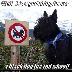Scotties are quite discriminated against!