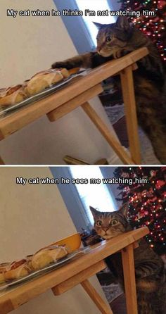 Funny Cats – A Funny Cat Videos Compilation 2015 Special thanks to Sharon Osberg: Here are some funny cats. I hope these funny cat videos … Funny Animal Memes, Funny Cat Videos, Animal Quotes, Funny Animal Pictures, Cute Funny Animals, Funny Cute, Cute Cats, Hilarious, Pet Memes