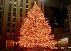 20 Awesome Christmas Tree Decorating Ideas   Tags: christmas tree, christmas tree decorations, white christmas tree, christmas tree toppers, christmas tree skirt, christmas tree stand, christmas tree lights, christmas tree ideas, christmas tree images, how to decorate a christmas tree.  #christmasdecorations #christmastreedecorationsb #christmastree #christmasdecorationideas #christmastreeideas #treedecorations #christmascountdown