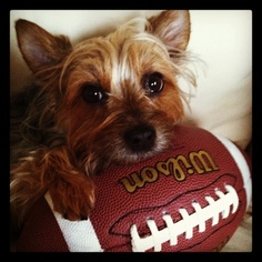 Fantasy Football Furball