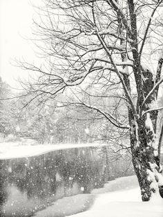 Snowfall | Fresh New England