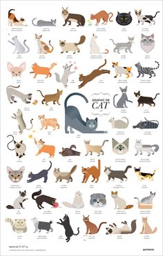 Animals And Pets, Cute Animals, Cat Reference, F2 Savannah Cat, Cat Posters, Chef D Oeuvre, Cat Facts, Warrior Cats, Cat Drawing