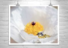 Bee Photograph, Bumble Bee, Insect Art, Nature Photography, Bees in Nature, Bee Art, Flower and Bee, Floral Art, Wildflowers, White Flower by MurrayBolesta on Etsy