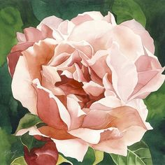 ARTFINDER: Summer rose by Alfred Ng - original watercolor painting on arches watercolor paper, Arches Watercolor Paper, Watercolor Rose, Watercolor Paintings, Flower Paintings, Watercolours, Pink Painting, Botanical Art, Paintings For Sale, Art