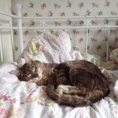 It's common knowledge that cats are content to sleep for the majority of the day, but under feline rule, there would be mandatory nap times every hour, on the hour. No excuses, no rebellious staying awake. Animals And Pets, Baby Animals, Cute Animals, Animals Images, Crazy Cat Lady, Crazy Cats, I Love Cats, Cool Cats, Animal Gato