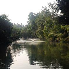 @fabriziacalda Buongiorno! Inizio questa giornata un po' grigia con una corsa ai #giardini Margherita. Questo è il laghetto che si trova nel parco ed è alimentato dal canale Savena.
