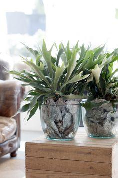 Woonplant van de Maand April: de Varen. #mwpd #planten #interieur #design