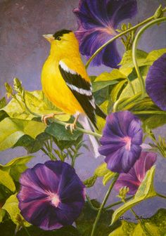 """""""Goldfinch in Morning Glory"""" by Dan D'Amico                                                                                                                                                                                 Más"""