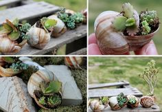 Lustige Gartendeko selber machen – DIY Pflanzgefäße -