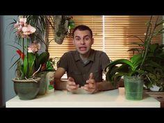 Jak sprawić by storczyk zakwitł? - YouTube