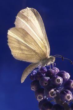 Butterfly or Moth?  Still, it is beautiful