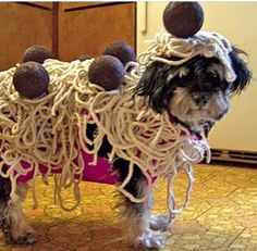 Funniest Dog Halloween costume! www.budgettravel.com