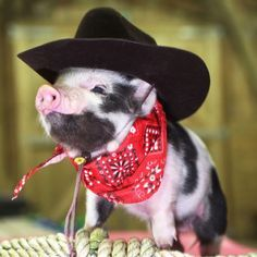 Micro Pig In Boots