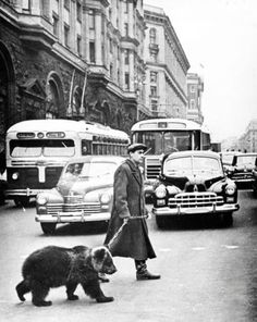 Gregory Sukhov takes his pet bear Mickey for a walk through the streets of Moscow.
