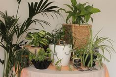 1 plant, 3 stylings - Urban Jungle Bloggers / durevedanslesetoiles.fr