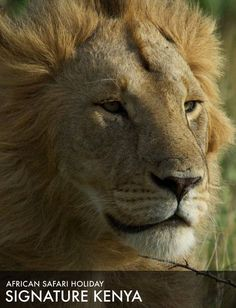 Find your perfect African safari. Best priced safari holidays available. Your trusted specialized safari operator. Safari Holidays, Safari Adventure, Out Of Africa, African Safari, Kenya, Tours, Pets, Animals, Animales