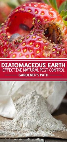 Diatomaceous earth is a wondrous powder made from the crushed bodies of prehistoric fossils, with many modern garden uses! Get tips for application as a natural pesticide. Plus, learn how to use it in your home and on your poultry flock in this guide from Gardener's Path.