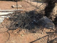Snare Poaching Increasing In Kruger National Park Kruger National Park, National Parks, Wildlife Conservation, What You Can Do, Planet Earth, Predator, Effort, Discovery, Grass