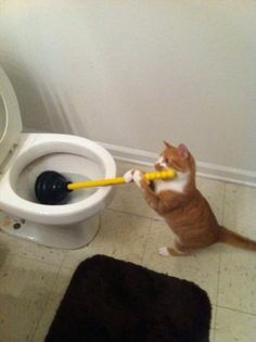 Helpful kitty