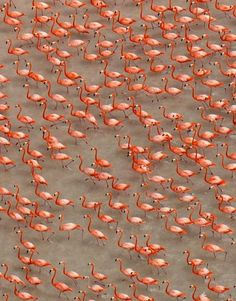 Flamingos, Mexico (2012) by German photographer Klaus Nigge (b.1956). via National Geographic