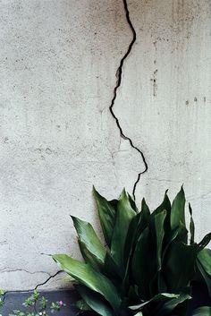 Yucca texture