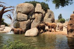 Bioparc Valencia. The Coolest Zoo Ever!