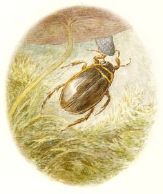 'A GREAT big water-beetle came up underneath the lily leaf'..  Beatrix Potter, The Tale of Mr. Jeremy Fisher (London: Frederick Warne [1906])