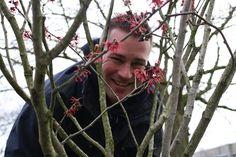 De Toverhazelaar, ook wel Hamamelis genoemd, is een van de meest bijzondere winterbloeiende planten die er is. Waar de meeste winterbloeiers een strenge vorst met moeite overleven, heeft de toverhazelaar er geen problemen mee! Hij draagt zijn bloemen van januari tot in het voorjaar. Er zijn drie soorten Hamamelis: de Japanse, de Chinese en een …