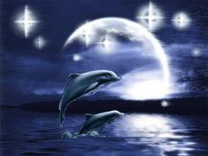 dolphins - Dolphins Wallpaper ID 412469 - Desktop Nexus Animals