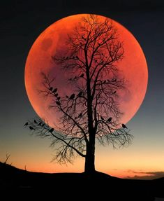 - very nice stuff - share it - Turkish Artist Abdullah Evindar Creates Fantastic Surreal Silhouette Photo Collages Beautiful Nature Wallpaper, Beautiful Moon, Beautiful Landscapes, Moon Pictures, Nature Pictures, Moon Photography, Landscape Photography, Moon Painting, Moon Art