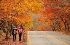 Fall foliage forecast Korea 2018 — Top 16 best places to see autumn fall foliage Korea 2018 - Living + Nomads – Travel tips, Guides, News & Information! Autumn In Korea, Korea Tourism, Autumn Scenery, Beautiful Places To Travel, Best Hikes, Oh The Places You'll Go, South Korea, The Great Outdoors, National Parks