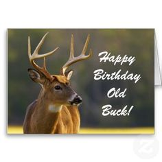 Hunting Funny Buck Animal Camo Happy Birthday 3 Greeting Card Happy birthday to the old buck ! Personalize this unique card for the hunter on your list! It features wildlife nature photography from the Great Smoky Mountains National Park of an 8 point whitetail buck with a natural camouflage green background and some birthday humor. Great for a sportsman, outdoors man or woman, hunting guide or someone who loves the country life, wildlife and animals.