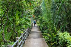 Bang Krachao (บางกระเจ้า) Bangkok cycle cycling green tour