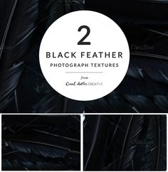 Black Feather Photo Pack by Coral Antler Creative on @creativemarket