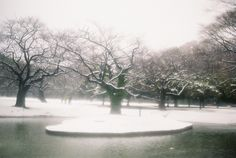 Island By Rebecca Culverhouse Yoyogi Park, Over The Years, Snow, Island, Explore, Photography, Travel, Outdoor, Outdoors