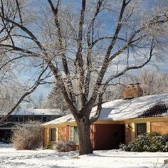 The Colorado State Forest Service provides tips to prepare urban trees for winter. Tree Care, State Forest, Forest Service, Colorado, Garage, Trees, Outdoors, Exterior, Gardening
