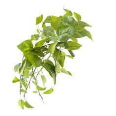 Suspended Pothos, 22'' Hanging Pots, Big Houses, Green Plants, Artificial Plants, Home Decor Trends, Houseplants, Accent Decor, Greenery, Decoration