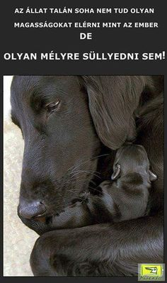 Quotations, Qoutes, Funny Quotes, Dog Quotes Love, Hyena, Real Friends, Rainbow Dash, Animals And Pets, Labrador Retriever