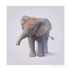 Elephant Giclee Print by John Butler Art at AllPosters.com