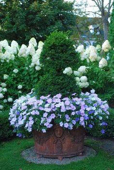 Beautiful pot plant - The Garden Aesthetic