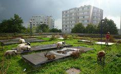 À Bagnolet, des chèvres se baladent sur les toits !