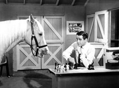 Technically not a person, but who wouldn't want to share a beer with a talking horse?! Not to mention one who was the star of his own TV show (1958-66) and shares my name!
