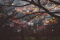 The glow of the town through a cradle of trees