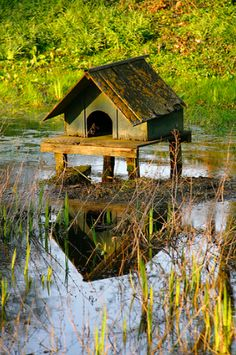 Duck house...if you have a big garden!