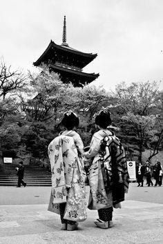 Kyoto in Cherry Blossom