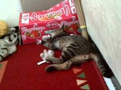 my cat+