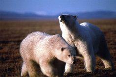 Wrangel Island