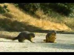 Geico Car Insurance Squirrel Commercial. Old one but still relevant...