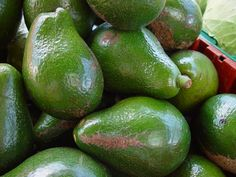 Aguacate [Persea americana Mill.] - Culinary vegetable